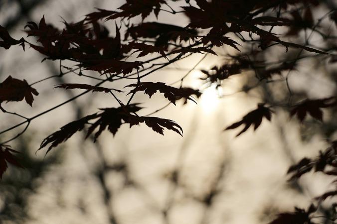 autumn-507555_1280