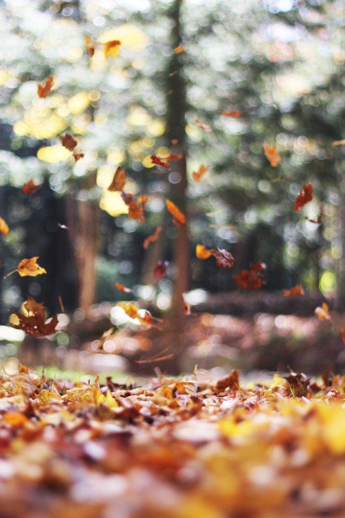 autumn-mott-15013.jpg